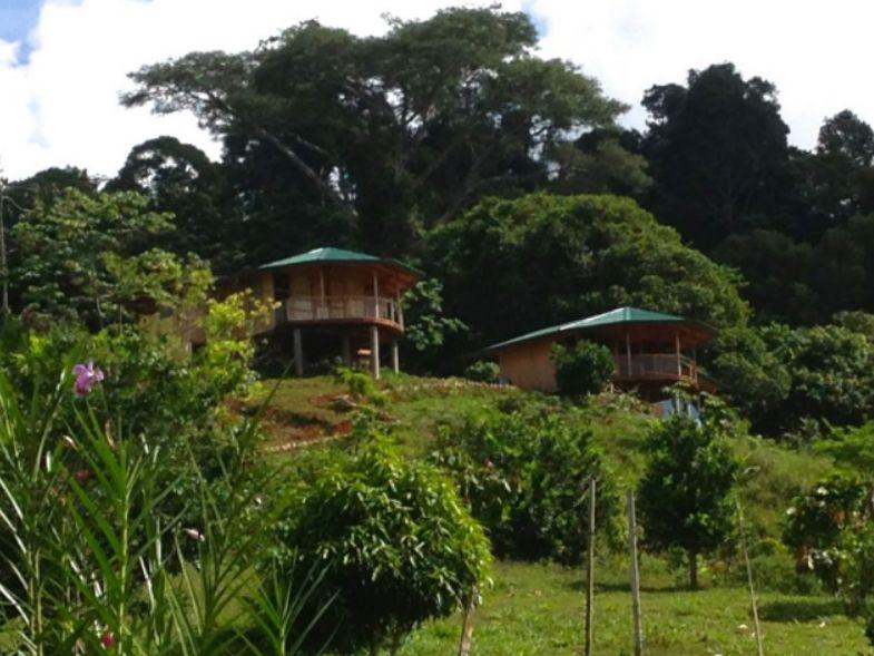 Monkey & Coconut Houses